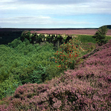 Click here for North York Moors Information